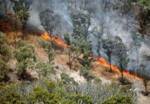 incendios-provocados-desforestaron-a-europa-hace-20-mil-anos